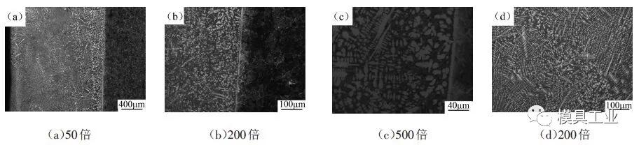 不同倍数下熔覆层的显微组织